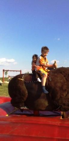 rodeo býk (rodeo bizon)