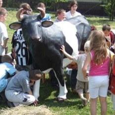 dojeni-kravy